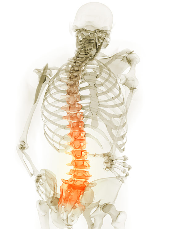 book a free spinal health check